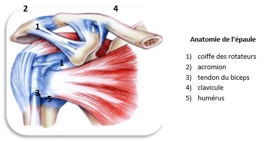 lesionepaule1